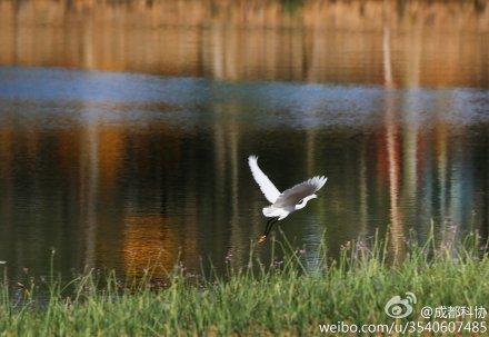白鹭湾湿地
